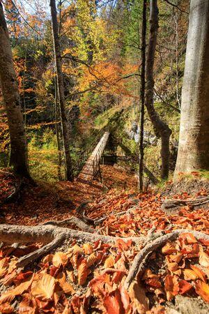 Autumn Forest with Beautiful sunlight in Austria Oetschergraeben
