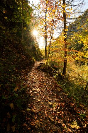 Autumn Forest with Beautiful sunlight in Austria Oetschergraeben