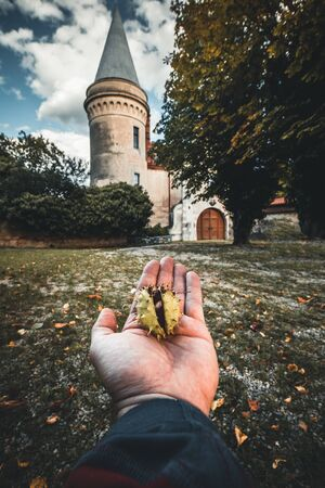 hand holding chestnut with a autumn background