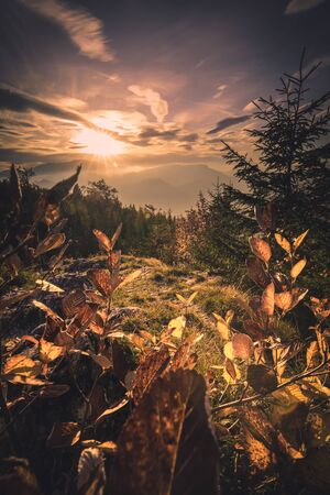Autumn Forest Sunset landscape in the mountains of Austria - Hohe Wand with colorful leaves Stockfoto