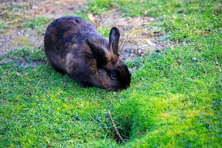 rabbit in green grass on a summer day in the nature in austria Stockfoto