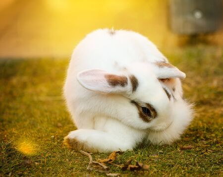 cute rabbit sitting in meadow on a sunny day in spring