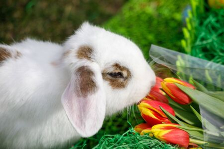 Easter bunny on spring green grass background with flowers