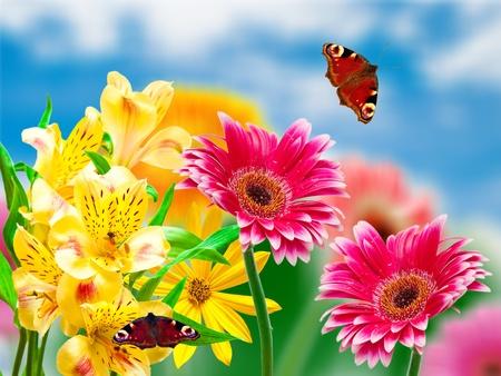 Gerber flowers on green summer background