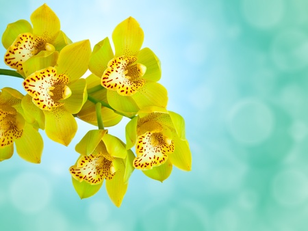 Orchid on abstract bokeh background photo