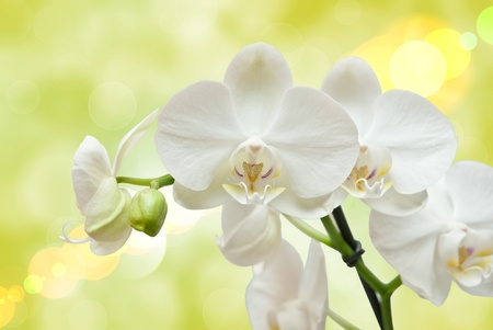 Closeup of orchid flower photo