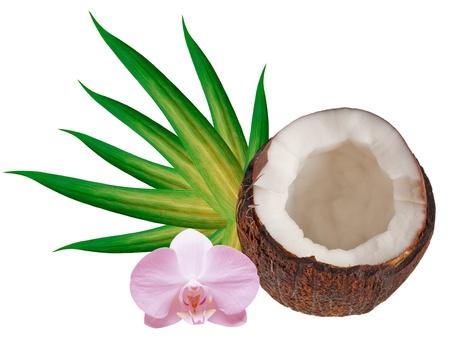 coconut isolated on white background Stock Photo - 11743654