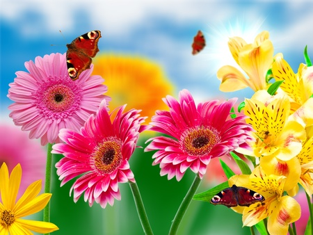 Gerber flowers on green summer background Stock Photo - 11743731