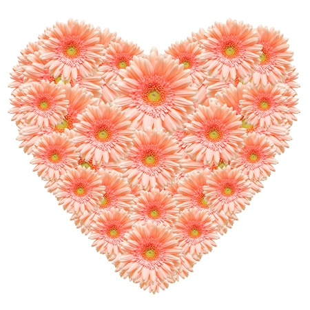 Heart shape made from pink  gerber flowers isolated on white background photo