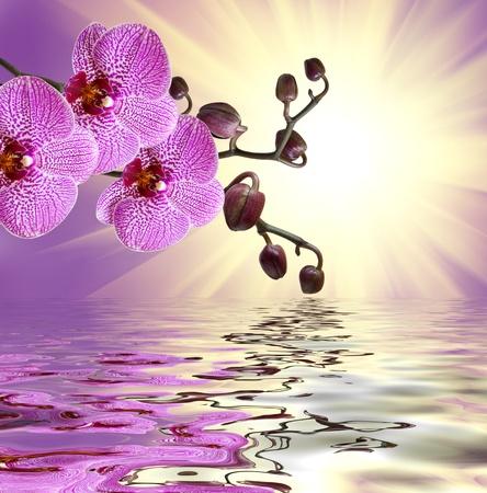 Nahaufnahme der Orchideenblüte