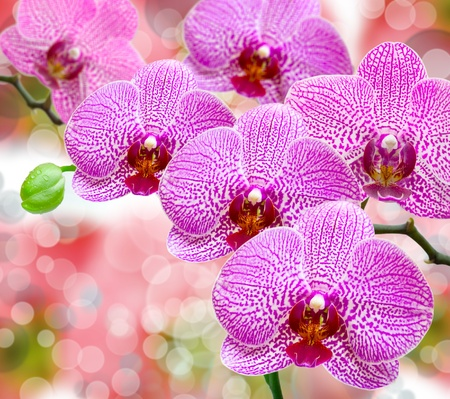 Close up of orchid flower photo