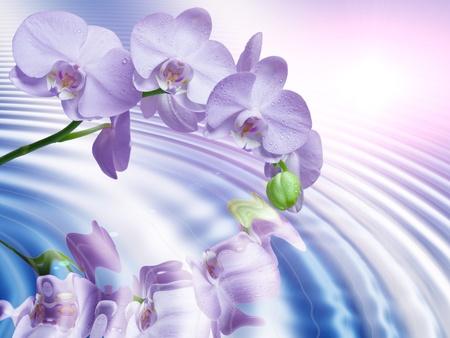 蘭の花のクローズ アップ