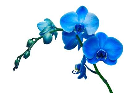 orchidee: orchidea isolato su sfondo bianco Archivio Fotografico