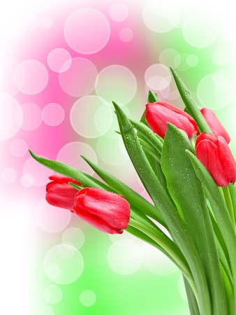 Close up of tulip flower photo