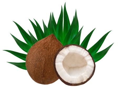 coconut isolated on white background Stock Photo - 13211525