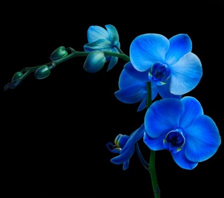 黒の背景上の蘭の花 写真素材