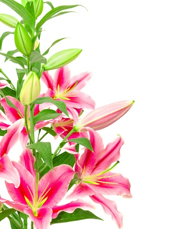 floral arrangement: pink lilies isolated on white background