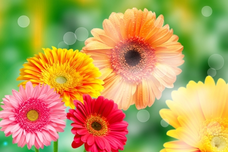 red gerber daisy: Gerber flowers on green summer background