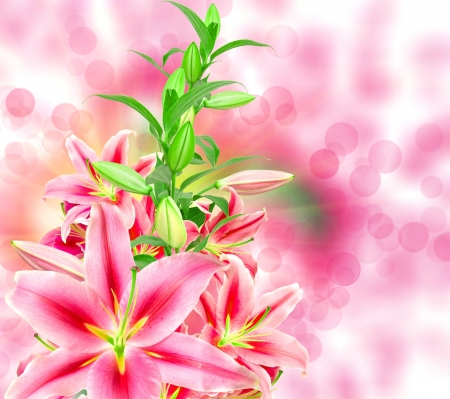 pink lilies close up photo