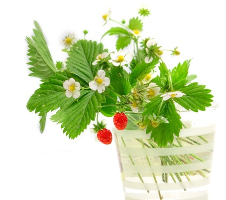 wild strawberry: wild strawberry isolated on white background Stock Photo