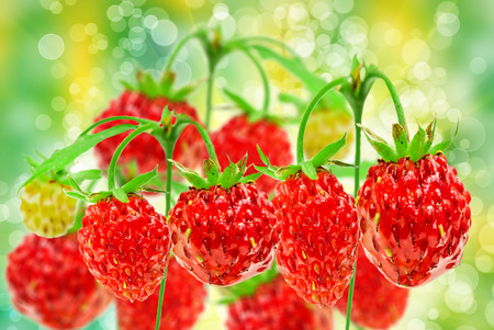 wild strawberry: wild strawberry  close up