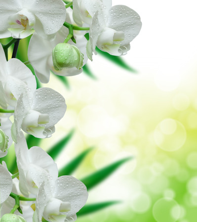 background the nature: Close up of orchid flower Stock Photo