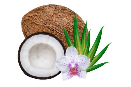 cocotier: noix de coco isolée sur fond blanc Banque d'images