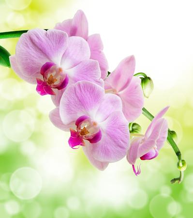 Cerca de la flor de la orqu?dea Foto de archivo - 46810520