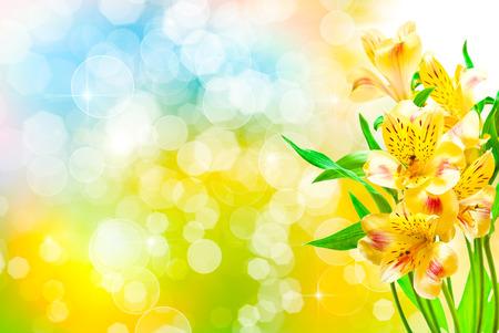 alstroemeria: Alstroemeria lily flowers close up