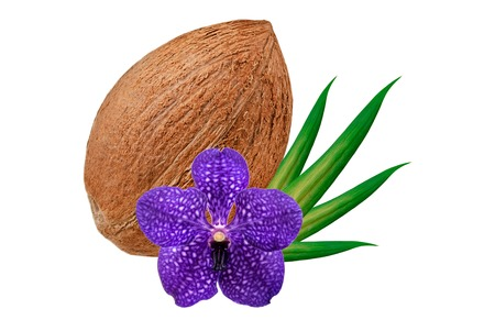 copra: Coconut isolated on white