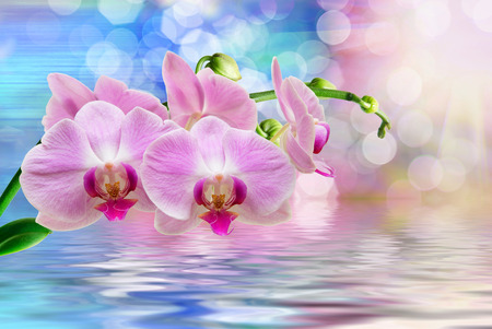 Orchid flower background reflected in water