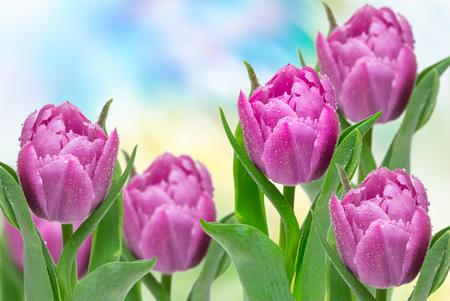 Tulpenblüten hautnah