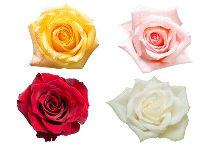 Fleur rose isolé sur blanc
