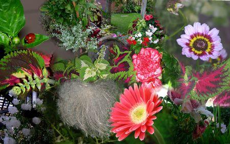 this is my girlfriends garden Wow Stock fotó
