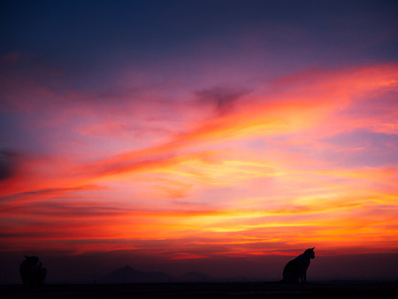 Silhouette of cat on the roof and sunset
