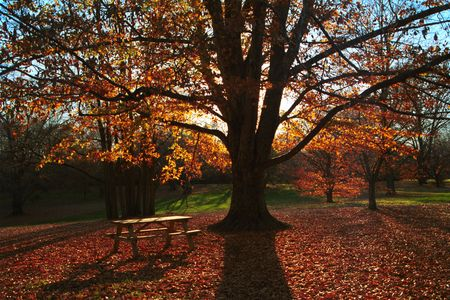 Quiet afternoon fall landscape with a bench in the foreground and the tree blocking direct sunlight.