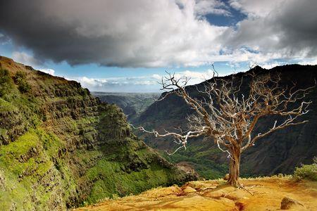 kauai: Summer landscape with dead tree at Waimea canyon, Kauai, Hawaii