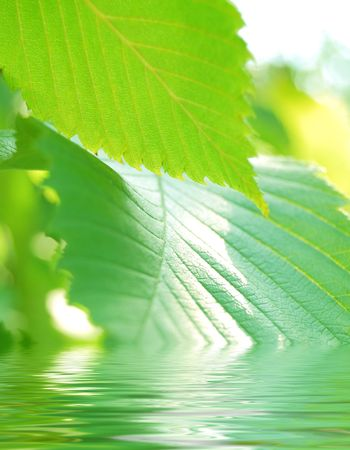 Close-up image of beautiful green summer leafs in the water Stock Photo