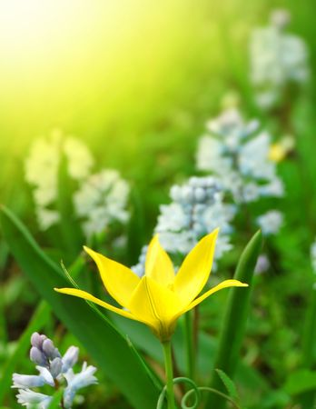Flowers on the Spring Meadow in Bright Sunlight Stock Photo - 6728619