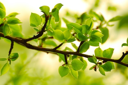 Spring Green Leaves in Bright Sunlight Stock Photo