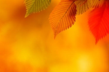 Colorful Autumn Leaves  Autumn Background