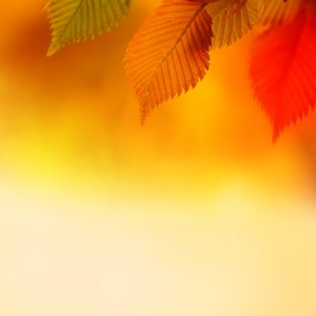 Colorful Autumn Leaves  Autumn Background photo