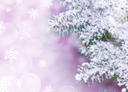 Christmas Background with Fir-tree and Real Snow Stock Photo