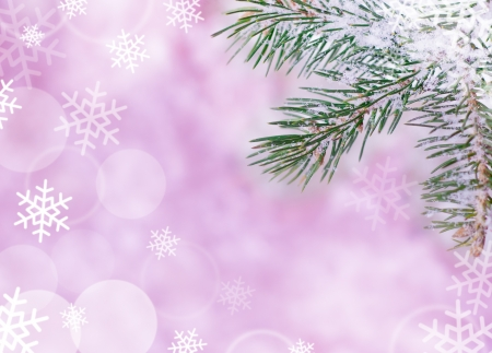christmas tree purple: Christmas Background with Fir-tree and Real Snow Stock Photo