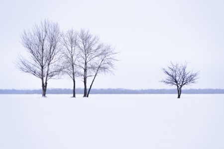 Winter landscape with lonely trees in mist time photo