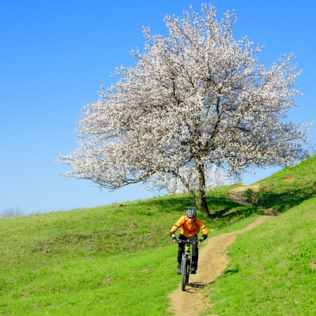 Cyclist Riding the Bike on the Green Hill Near Beautiful Tree with White Flowers Stockfoto