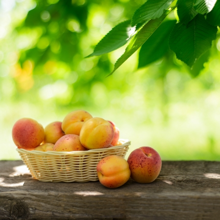Ripe Tasty Apricots in the Basket on the Old Wooden Table on the Green Foliage Background Stock Photo - 21219671