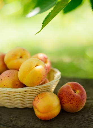 Ripe Tasty Apricots in the Basket on the Old Wooden Table on the Green Foliage Background photo