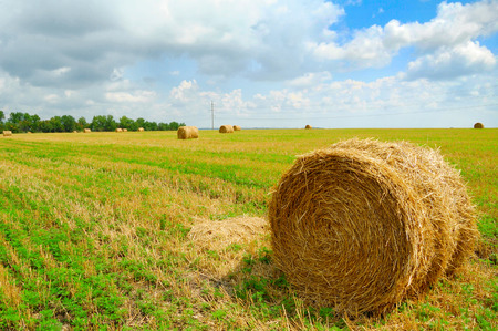 grain fields: Harvested Field with Round Straw Bales and Blue Sky with Low Clouds