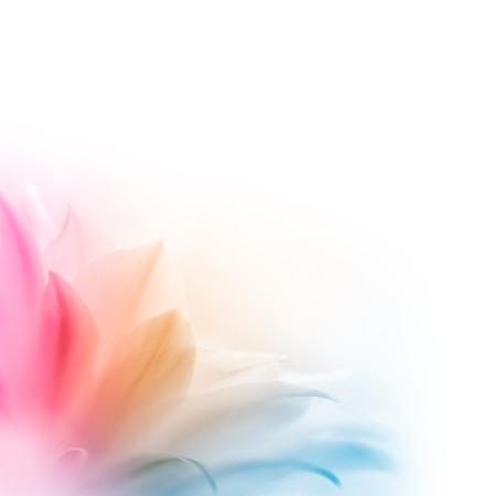 Bright Multicolored Cactus Flower on the White Background. Abstract Design Foto de archivo